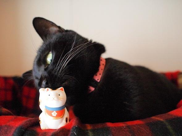 招き猫vsTico
