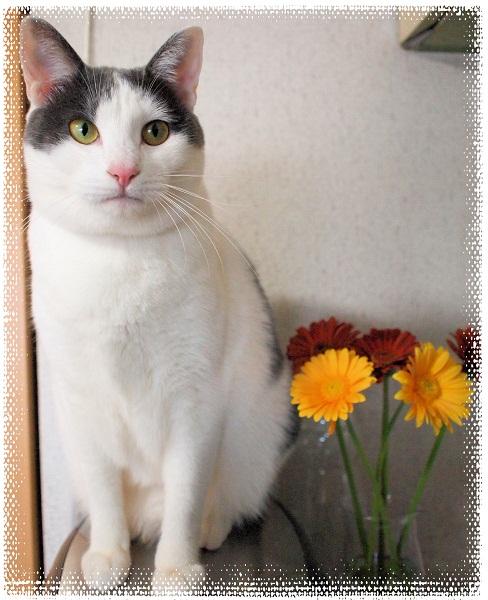 花とプーちゃん