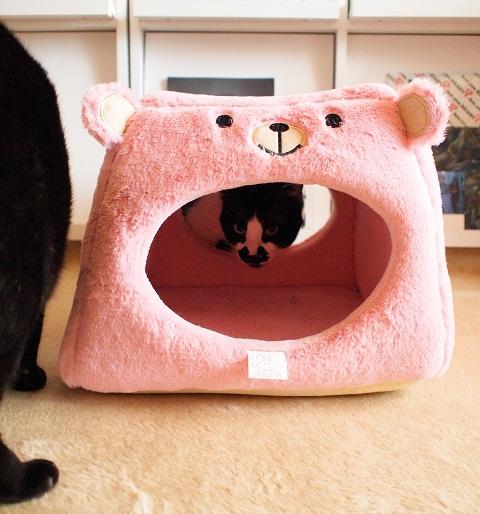 ピンクマたんとみにゃさん