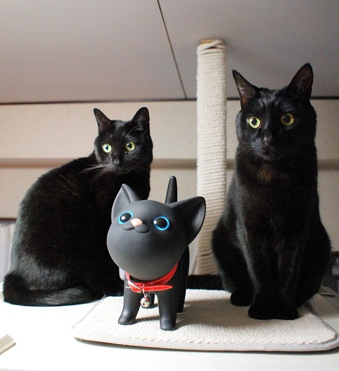 新入り黒猫