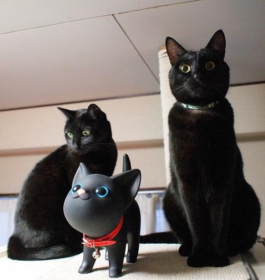 新入り黒猫とキリリ剛健