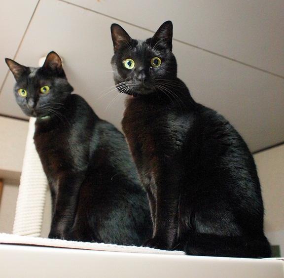チーム黒猫