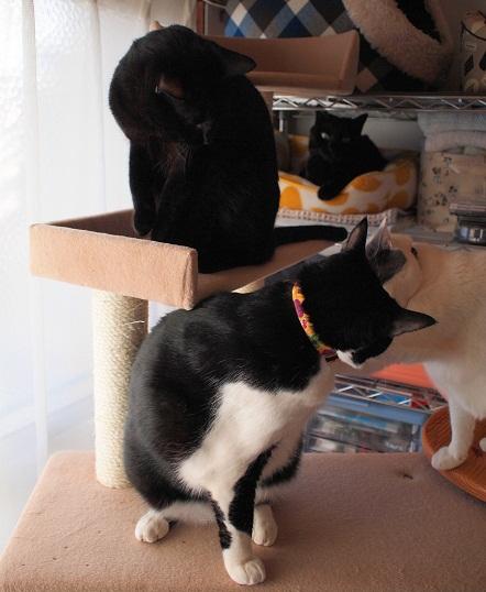 猫棚とキャットタワー