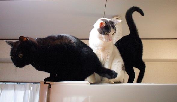 黒猫&白系猫&黒猫