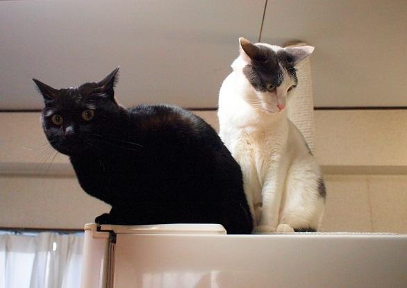 黒猫&白系猫