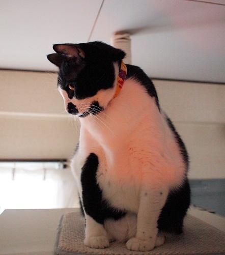 猫の日の鯛