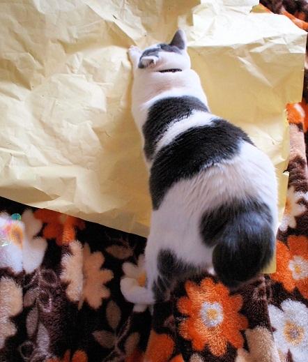猫の日スペシャル