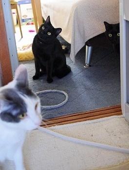 こっそり黒猫チーム