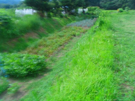 022_20110830103038.jpg