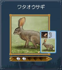 07ワタオウサギ
