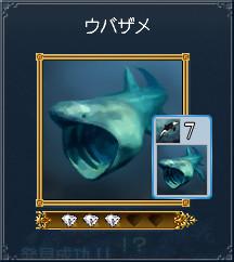 10ウバザメ