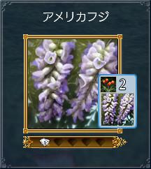 01_アメリカフジ