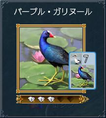 07_パープル・ガリヌール