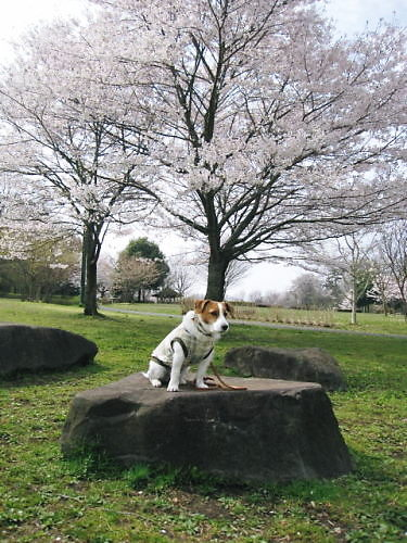 2012長岡公園276