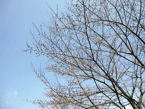 2012草花木015