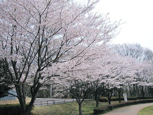 2012草花木028