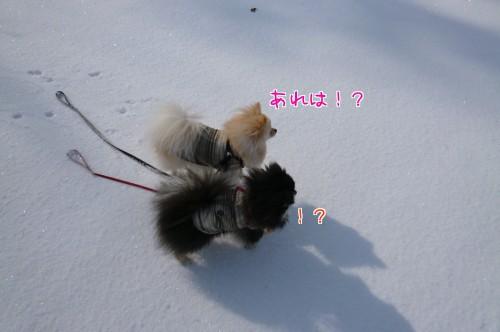 0309e_20120307120212.jpg