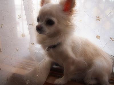 2011_0605_172721-P6050013.jpg