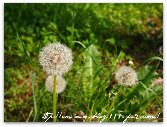 2011_0611_151947-P6110066.jpg