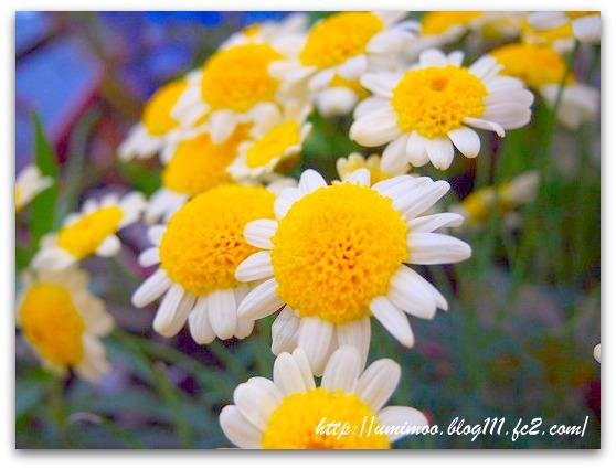 2011_0611_183943-P6110071.jpg