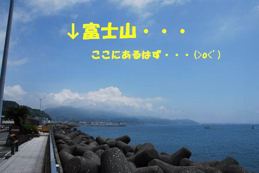DSC_0208_512.jpg