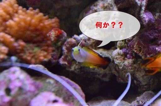 DSC_1940_512_20111129094933.jpg