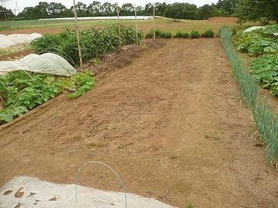 家庭菜園のスペースゲット!
