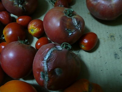 傷んだトマト