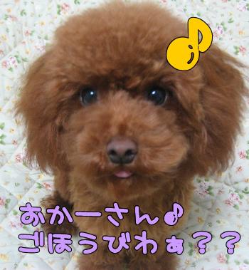 umi_tona 0333
