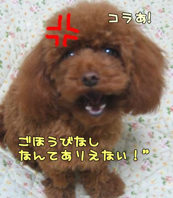 umi_tona 06124