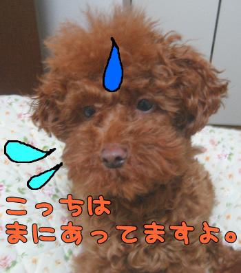 umi_tona 01125