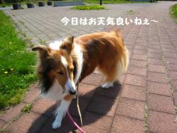 IMG_0050-1.jpg