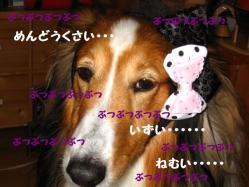 IMG_0269-1.jpg