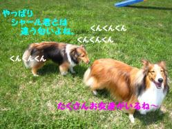 IMG_0346-1.jpg