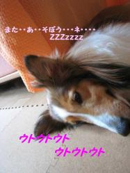 IMG_0431-1.jpg