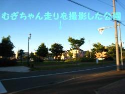 IMG_0517-1.jpg
