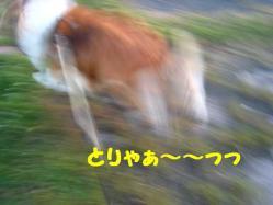 IMG_0548-1.jpg
