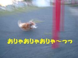 IMG_0550-1.jpg