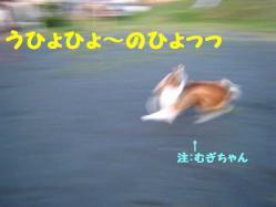 IMG_0556-2.jpg
