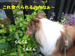 IMG_0633-1.jpg