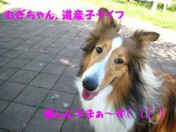 IMG_0848-1.jpg