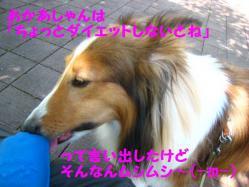 IMG_0851-1.jpg