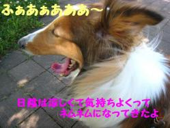IMG_0853-1.jpg