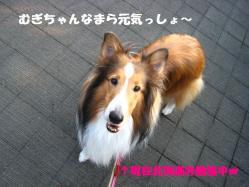 IMG_9499-1.jpg