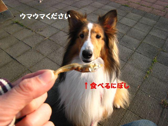 IMG_9517-1.jpg