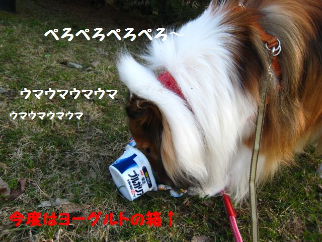 IMG_9532-1.jpg