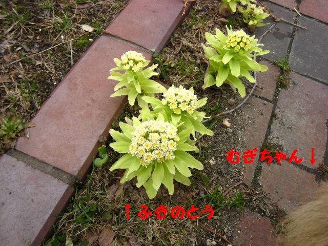 IMG_9546-1.jpg