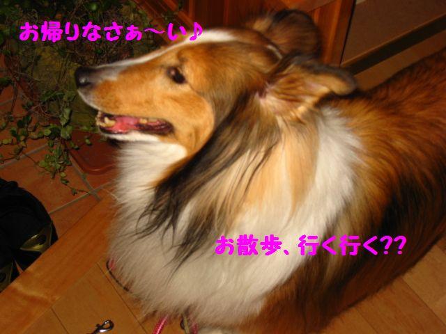 IMG_9556-1.jpg