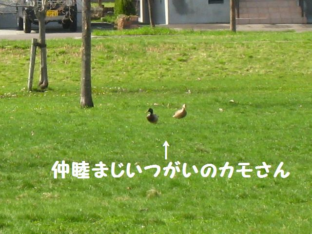 IMG_9603-1.jpg