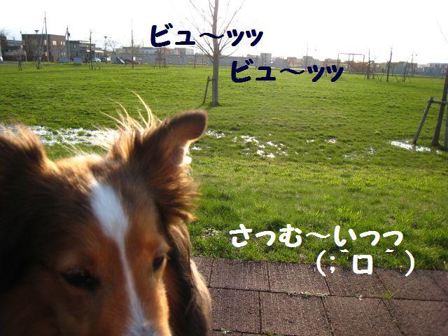 IMG_9623-1.jpg